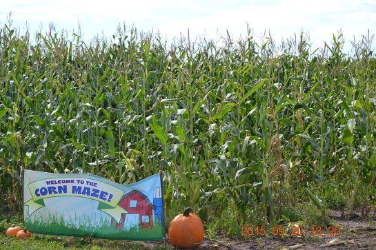 DSC_4267 corn maze entrance