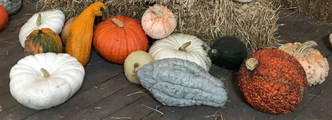 IMG_4067 pumpkins