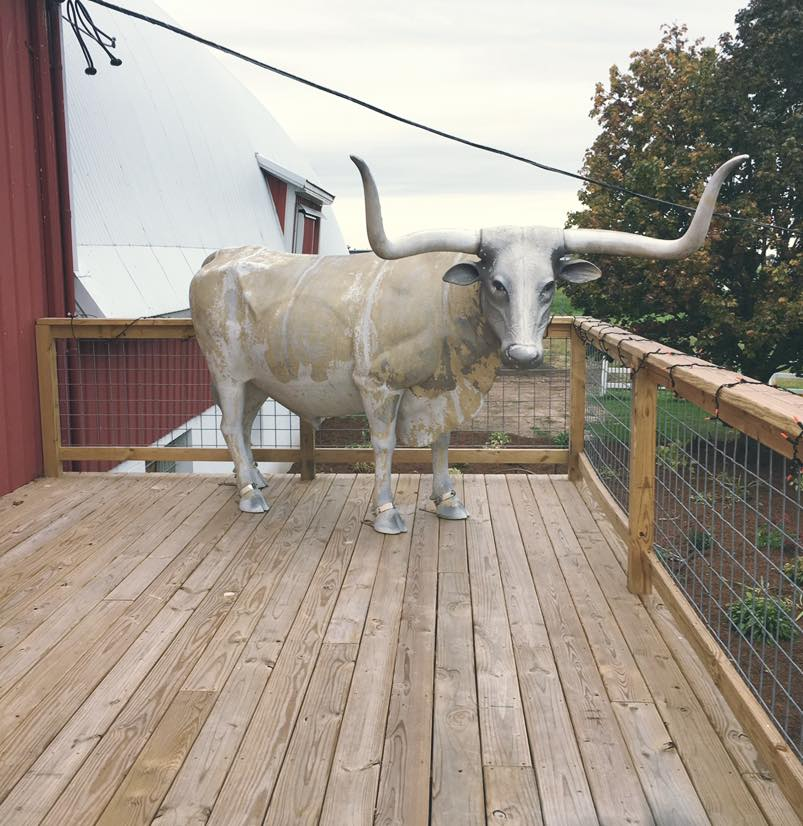 bull on new deck